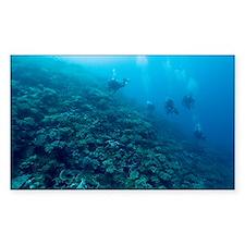 al reef - Decal