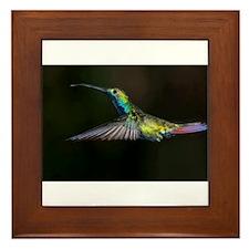 Rainbow Hummingbird Framed Tile