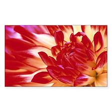 Dahlia flower - Decal