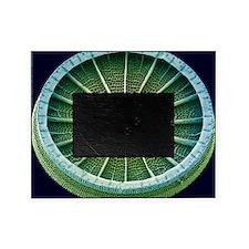 Diatom, SEM - Picture Frame