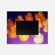 Rubber ducks - Picture Frame