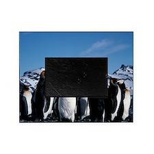 King penguins - Picture Frame