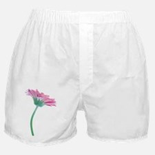 Gerbera (Gerbera sp.) - Boxer Shorts