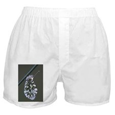 Orange-tip butterfly - Boxer Shorts