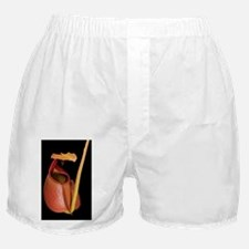 Fanged pitcher plant - Boxer Shorts