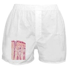 h - Boxer Shorts