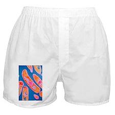 ia - Boxer Shorts