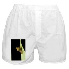 is - Boxer Shorts