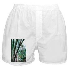 Dragonflies metamorphosis - Boxer Shorts