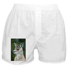 Eastern grey kangaroo - Boxer Shorts