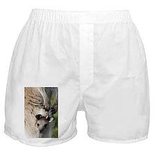 Eastern grey kangaroo joey - Boxer Shorts