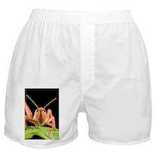 Desert locust - Boxer Shorts