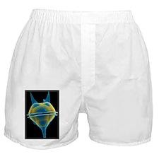 Dinoflagellate, SEM - Boxer Shorts