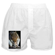 Grey squirrel - Boxer Shorts