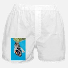 Emerging red admiral butterfly - Boxer Shorts
