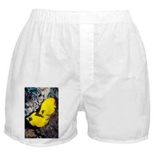 Golden butterflyfish pair - Boxer Shorts