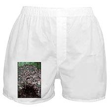Leaf mould heap - Boxer Shorts