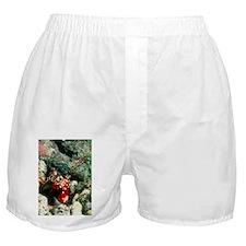 Harlequin mantis shrimp - Boxer Shorts