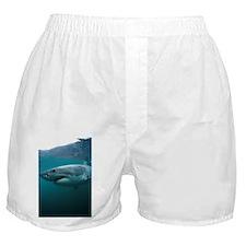 Great white shark - Boxer Shorts