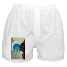 Lion's mane jellyfish - Boxer Shorts