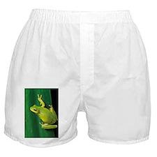 Green tree frog - Boxer Shorts