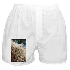 Land snails - Boxer Shorts
