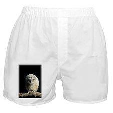 Tawny owl chick - Boxer Shorts