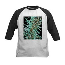 Diatoms, SEM - Tee
