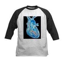 conduction in the heart - Tee