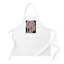 Internal brain anatomy, artwork - Apron