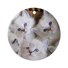 Cup o' Kittens Ornament (Round)