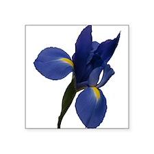 Blue Iris Sticker