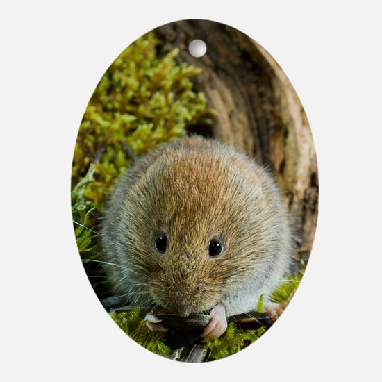 Bank vole - Oval Ornament