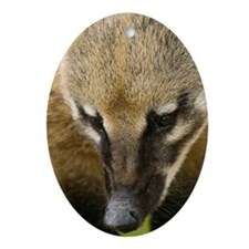 Coati - Oval Ornament