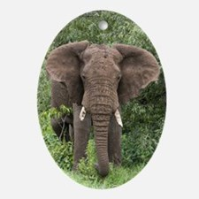 African elephant - Oval Ornament