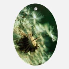 Dandelion clock - Oval Ornament