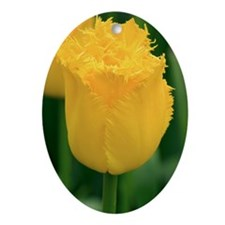 Tulip (Tulipa 'Hamilton') - Oval Ornament