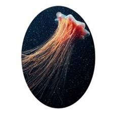 Lion's mane jellyfish - Oval Ornament