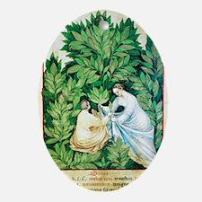Herbal medicine, 15th century - Oval Ornament