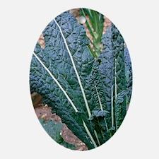 Organic black kale cabbage - Oval Ornament