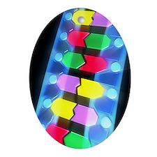 DNA molecule - Oval Ornament
