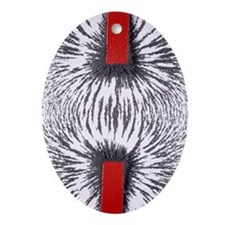 Magnetic attraction - Oval Ornament