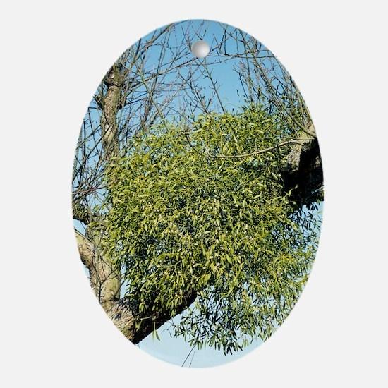 Mistletoe - Oval Ornament
