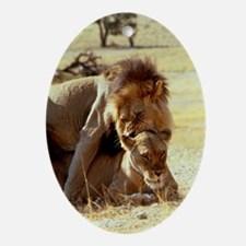 Lions mating - Oval Ornament