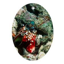 Harlequin mantis shrimp - Oval Ornament