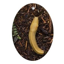 Pacific banana slug - Oval Ornament