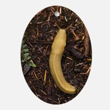 Pacific banana slug - Oval Ornament