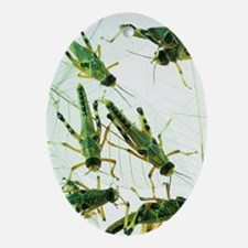 Locusts - Oval Ornament