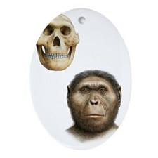 Paranthropus robustus - Oval Ornament