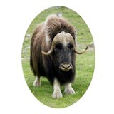 Muskox Oval Ornaments